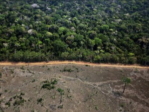 greenpeace_documenta_area_de_desmatamento_no_municipio_de_labrea_no_sul_do_amazonas
